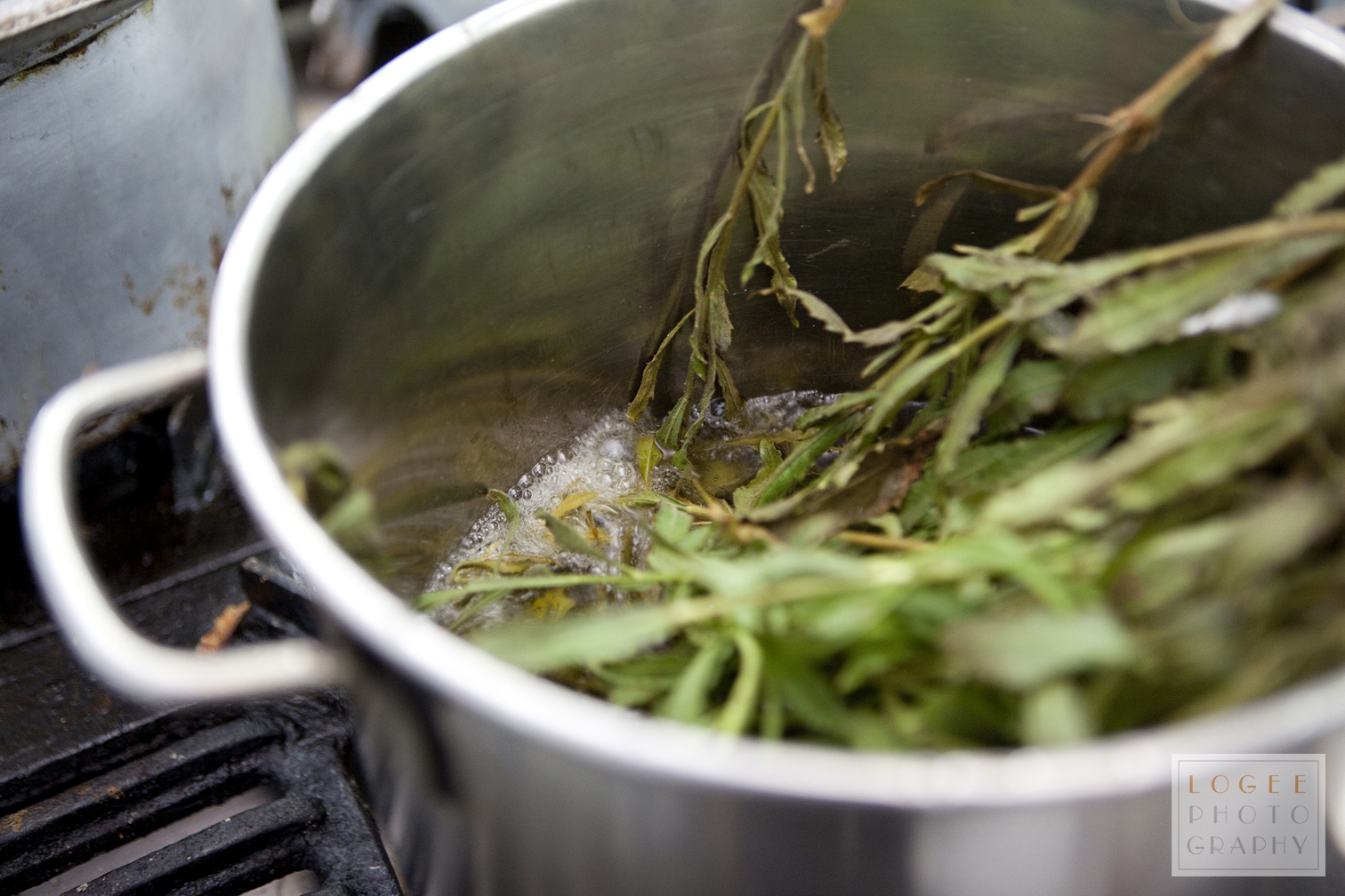 Boiling the Inula viscosa leaves.