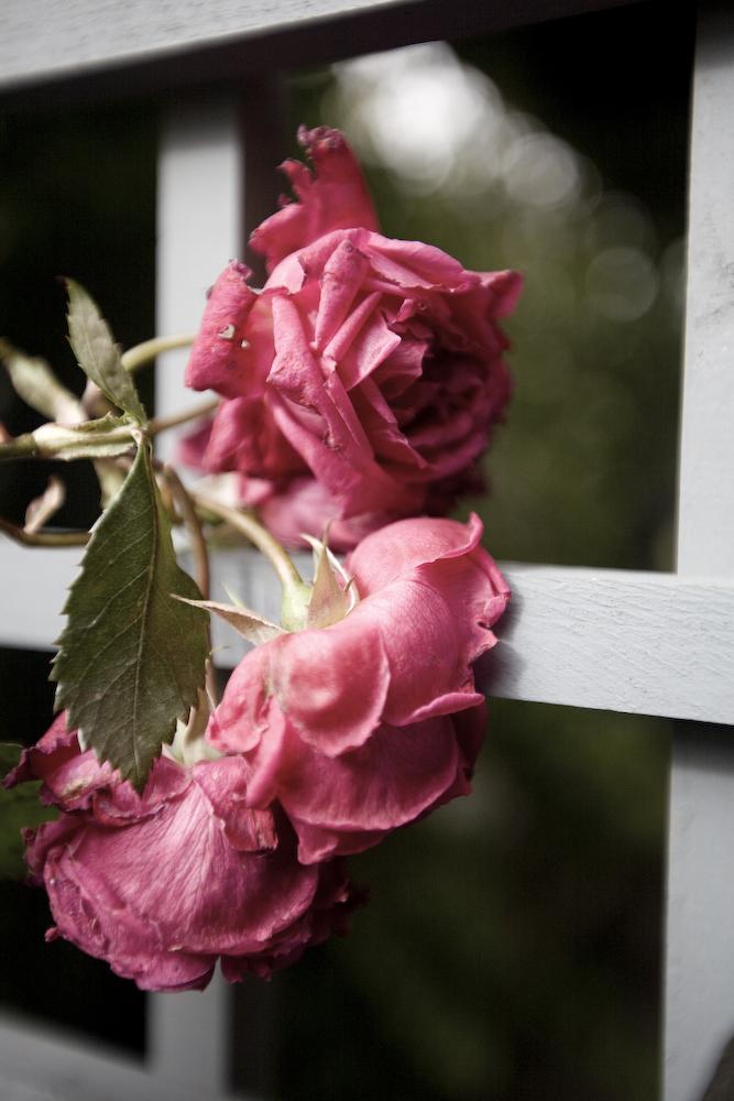 Frozen Blooms - 6096w