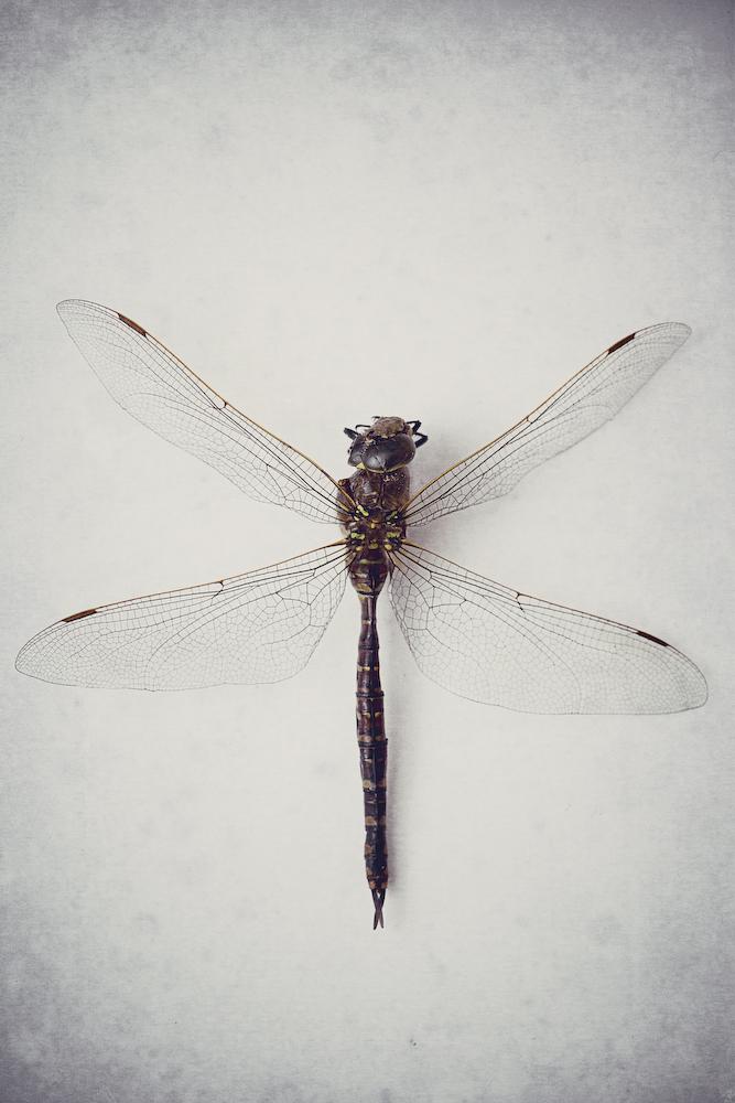 Specimen - 2799w